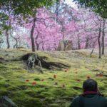 京都の見どころ|絶対この目に焼き付ける