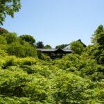 """京都の青もみじ 新緑の京都は""""サイコー""""です"""